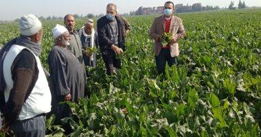 وكيل زراعة الشرقية: حصاد وتوريد 2900 فدان من محصول البنجر.. صور