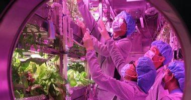 طلاب صينيون يقضون عاما فى زراعة الطعام وتوليد الأكسجين فى بيئة محاكاة للقمر