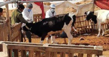 الزراعة: صندوق التأمين على الثروة الحيوانية يطلق قافلة بيطرية في المنوفية
