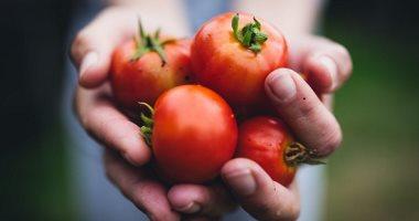 الصناعات الغذائية: 7.2مليون دولار حجم استيراد المنتجات المصنعة من الطماطم 2020