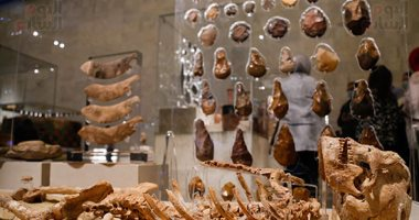 ما هى قصة أقدم هيكل عظمى بشرى معروض فى متحف الحضارة؟ فيديو