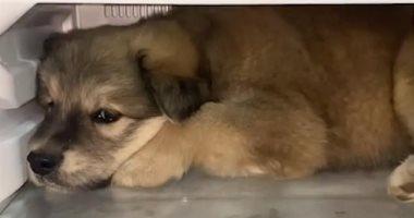 القبض على عامل بجراج فى الهرم بتهمة قتل كلبة