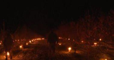 سكان بلدة فرنسية يشعلون الشموع وسط بساتين الفاكهة لتدفئتها من البرد.. فيديو