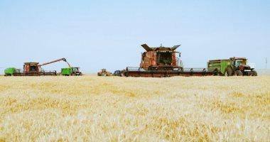 بدء توريد القمح ببنى سويف 15 إبريل والمحافظة تنتظر توريد 2.2 مليون إردب
