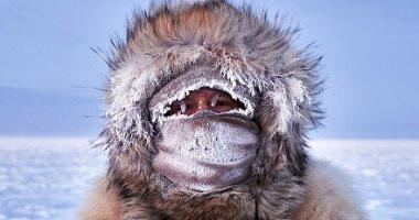 اللقطة المذهلة.. مسابقة تصوير فوتوغرافى تحتفى بالثقافات والحياة البرية .. ألبوم صور