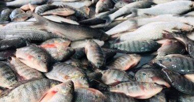 حملات رقابية على الأسواق لضبط الأسماك الفاسدة قبل شم النسيم