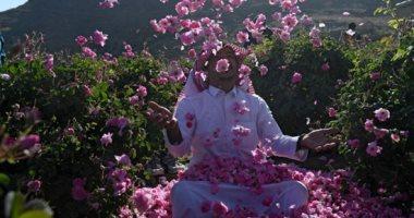 السعودية نيوز                                                فدادين السعادة.. مدينة الورود فى السعودية تزدهر خلال رمضان.. ألبوم صور