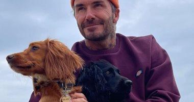 ديفيد بيكهام يتنزه مع كلابه بعد افتتاح مباريات ناديه الأمريكي الجديد
