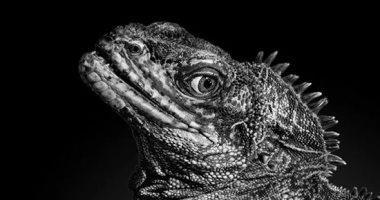 نحن نشبهكم.. مشروع فني يظهر النقاط المشتركة بين الإنسان والحيوان.. ألبوم صور