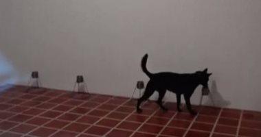تدريب الكلاب فى السلفادور على رصد مصابى كورونا من رائحة العرق.. فيديو وصور