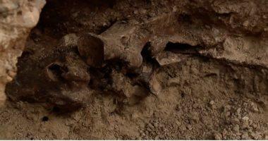 اكتشاف أحفورة لخيل من العصر الجليدى عن طريق الصدفة