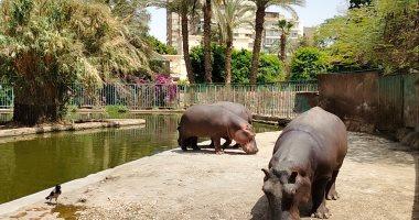 حديقة الحيوان بالجيزة تغلق أبوابها أمام الزوار لمدة أسبوعين بسبب كورونا