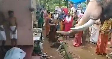 الصديق الوفي.. فيل يودع مدربه ويشارك فى مراسم جنازته بعد صداقة 25 عامًا.. فيديو