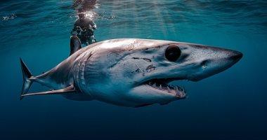 أسد البحر وسمك القرش.. الصور الفائزة في مسابقة الأمم المتحدة للمحيطات..ألبوم صور