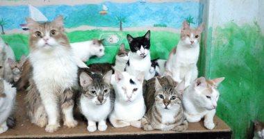 """الرحمة حلوة.. شقيقتان بريطانيتان بالأقصر يجمعان 100 قطة وكلب لرعايتها """"صور"""""""