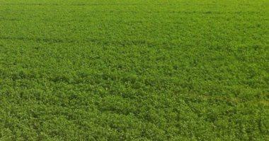 """""""الزراعة"""" تصدر توصيات مهمة للمزارعين لضمان الحصول على تقاوى عالية الجودة والإنتاجية"""