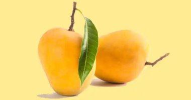 7 فوائد صحية لأوراق المانجو.. أبرزها إنقاص الوزن