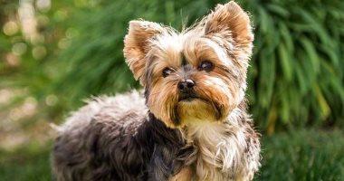 من إيطاليا لجنوب فرنسا.. كلب ضائع يقطع 380 كم ويعود لمنزله.. فيديو