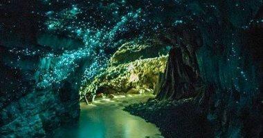 """نظرة على """"آخر غابة بدائية فى العالم"""" وما تحتويها من كائنات.. صور"""