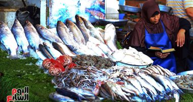 The stability of fish prices in the transit market for wholesale today, Monday