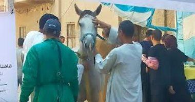 حياة كريمة بقنا.. مناظرة 510 رؤوس ماشية فى قافلة بيطرية مجانية بقرية المراشدة