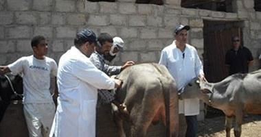 تحصين 42 ألف حيوان ضد مرض طاعون المجترات الصغيرة بكفر الشيخ