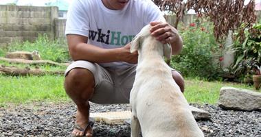 7 شروط لتكون مربيًا جيدًا للحيوانات الأليفة