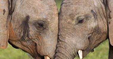 """بالصور.. """"فيلان"""" يتبادلان القبل فى لحظة رومانسية على طريقة البشر"""