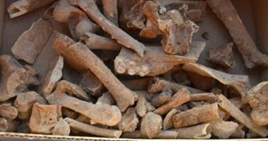 علماء روس يعثرون على آثار لمقبرة أسود الكهف ترجع لـ30 ألف عام