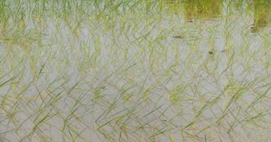 """""""الزراعة"""" تضع 7 توصيات حول طرق رى وتسميد المحصول خلال سقوط الأمطار"""