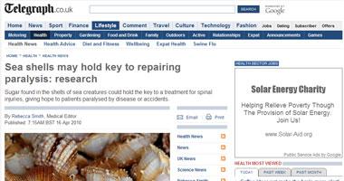 أصداف البحر تمتلك مفتاح علاج