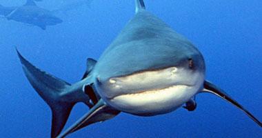 سمك القرش يهدد السياحة