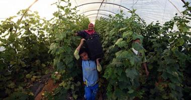 لمزارعى الخضار.. تعرف على الأوراق المطلوبة للحصول على رخصة صوبة و مشتل