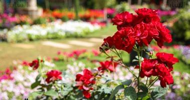 الزراعة: نبحث تحويل معرض زهور الربيع لحدث ثقافى اقتصادى