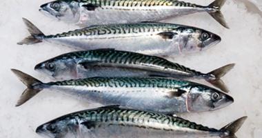 سمك الماكريل المدخن يحصل على حماية أوروبية