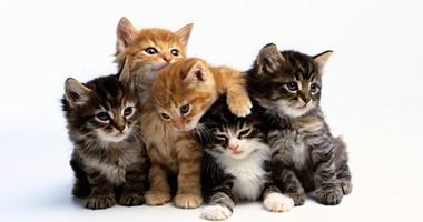 ضحك ولعب.. مواقف مجنونة تخليك تختار القطط كحيوان أليف معك فى البيت