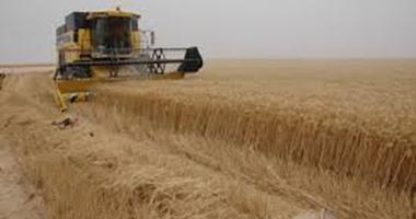 """""""التموين"""": مخزون القمح يكفى حتى الأسبوع الثانى من فبراير المقبل"""