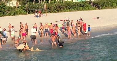 """بالصور..فى مشهد نادر قبالة ساحل خليج فلوريدا اصطياد سمك قرش """"المنشار"""""""