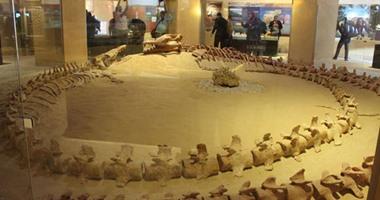 بالصور.. محمية وادى الحيتان بالفيوم أهم مناطق التراث الطبيعى فى العالم.. المحمية كنز للبحث العلمى فى مجال الحفريات الفقارية.. وبها أول متحف للحفريات بالشرق الأوسط وأضخم حوت متحجر