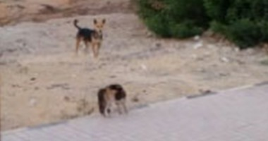 كلب ضال يعقر 14 طفلا بسوهاج.. والأهالى يقتلونه