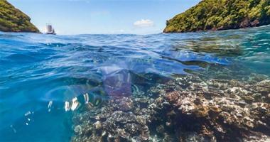 بالصور.. جوجل تطرح خدمة جديدة لاستكشاف الحياة البحرية