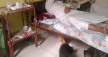 واتس آب اليوم السابع : انتشار القطط أسفل أسرّة مستشفى السنطة بالغربية  اليوم السابع