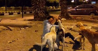 129 ألف حالة إصابة بعقر الكلاب بالربع الأول لـ2019.. السعار منتشر بـ150 دولة