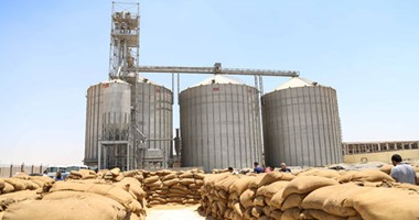 التموين تتعاقد على شراء 535 ألف طن قمح لإنتاج الخبز المدعم