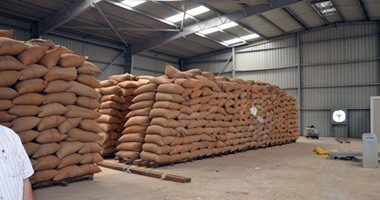السلع التموينية: شراء 360 ألف طن من القمح الروسى والرومانى والأوكراني