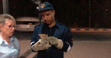 """بالفيديو.. الحماية المدنية بالغردقة تنقذ """"قطة"""" من حفرة تحت عامود كهرباء"""