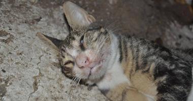 """نشطاء بيئيون يصعدون ضد """"تطهير نادى الجزيرة من القطط""""..صور مؤلمة لقطط مقتولة تسبب غضبًا واسعًا على مواقع التواصل..والأعضاء يحتشدون غاضبين.. ووقفة احتجاجية الثلاثاء"""
