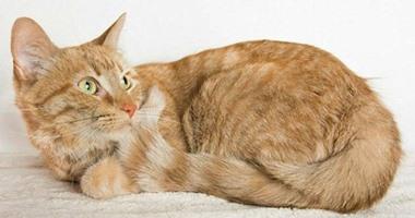 قوات الدفاع المدنى بالدقهلية تنقذ قطة سقطت أسفل عمود إنارة
