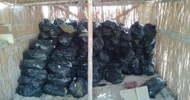 ضبط 64 مزرعة بانجو وحرق 18 طنا من النبات المخدر فى حملة مكبرة برأس سدر