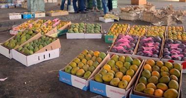 الزراعة: 20388 طنا صادرات المانجو للأسواق العالمية وجارى شحن المزيد